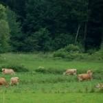 Bloggers + Farmers = Beginning of a Beautiful Friendship
