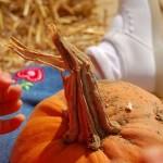 Sunday Snapshot — Pumpkin Patch!