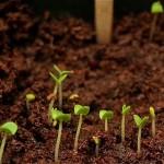 Indoor Herb Garden Update… Sprouts!