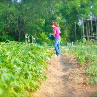 Sunday Snapshot — Growing Garden