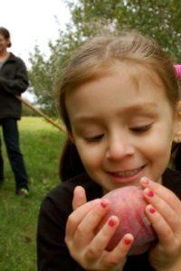 Simple Pleasures Saturday — Apples!!