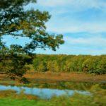 Sunday Snapshot – Celebrating Autumn