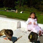 Cheap Thrills — Feeding Ducks