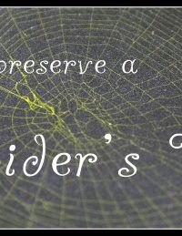 How to Preserve a Spider's Web