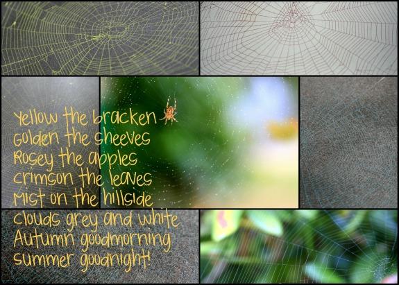 Spider Web Collage