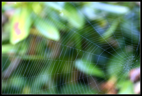 Fresh Spider Web