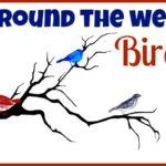 Around the Web: Birds