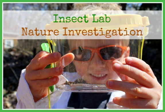 insect lab nature investigation