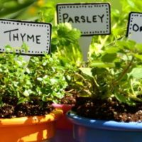 Container Gardening — Potted Herbs