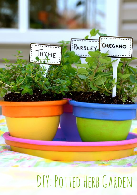 DIY Potted Herb Garden