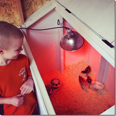 Raising Chickens as a Family