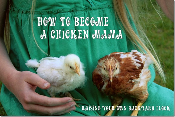 How to Raise Chickens as a Family