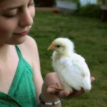 Becoming a Chicken Mama