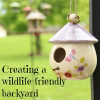 How to Create a Wildlife-Friendly Backyard