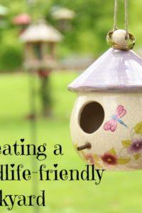 How to Create a Wildlife-Friendly Backyard