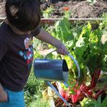 Teaching Empathy To Children Through Volunteering