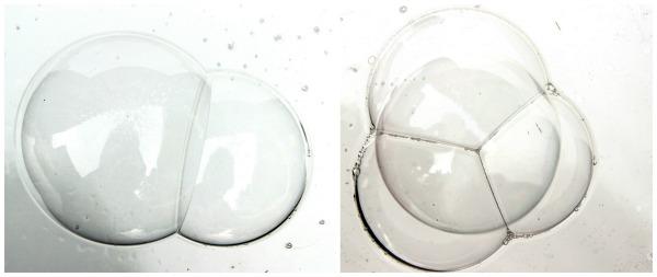 Bubble Science - Inner Child Fun