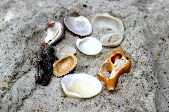 Simple Beach Keepsake Craft
