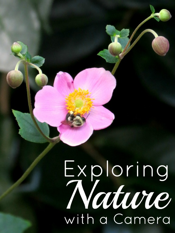 Explore Nature with a Camera