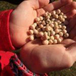 5 Tips to Grow Your Own Garden