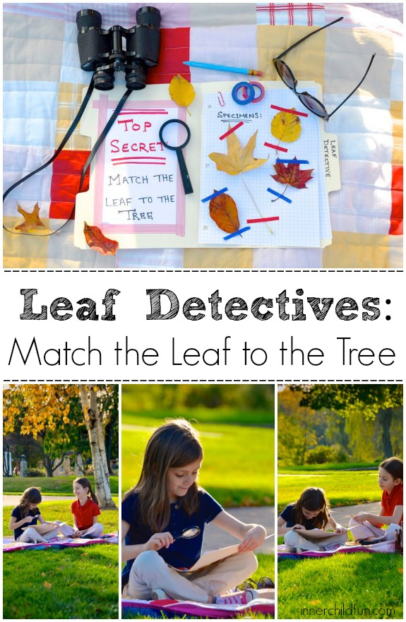 Autumn Nature Activity: Match the Leaf to the Tree!