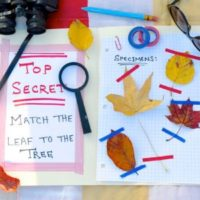 Autumn Nature Activity – Leaf Detectives!