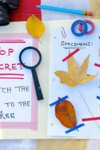 Autumn Nature Activity – Leaf Detectives!