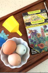 How to Make Seed Bombs in Eggshells