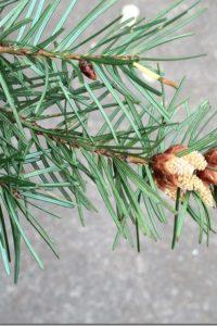 Tree Nature Study