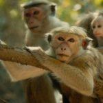 Monkey Learning Activities!