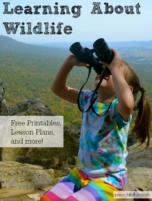 Learning About Wildlife - Free Lesson Plans!